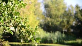 Sun glare on tree near the river. Sun glare on a tree near the river stock video