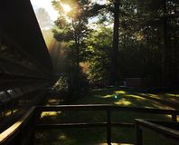 Sun Glare Through Trees at the Dining Hall stock image