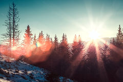 Sun and glare in winter mountains Royalty Free Stock Photography