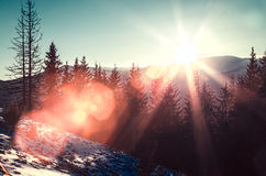 Sun and glare in winter mountains Stock Image