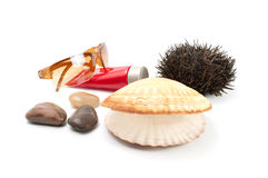 Sun glass  seashell,stones, sea-urchin Stock Photos