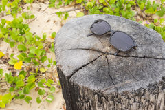 Sun Glass on stump and Ipomoea pes-caprae plant on the beach. A stump and Ipomoea pes-caprae plant on the beach stock images