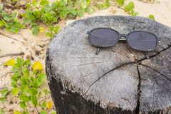 Sun Glass on stump and Ipomoea pes-caprae plant on the beach. A stump and Ipomoea pes-caprae plant on the beach royalty free stock image