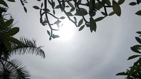 Sun Glimmering through tropical trees in a sunny day. Bali island, Indonesia. Asia stock video