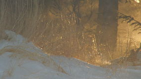 Sun glow grass blowing snow. Video of sun glow grass blowing snow stock video footage