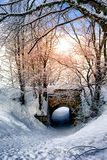 Sun Glowing In Snowy Forest Royalty Free Stock Image