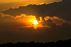 Sun goes down with flying bird Royalty Free Stock Photography