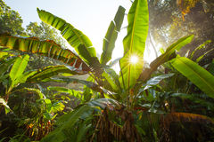 Sun goes through leaves in jungles Royalty Free Stock Photography