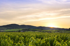 Sun is going down, Beaujolais, France Royalty Free Stock Photo