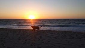 Sunset Dog Beach royalty free stock images