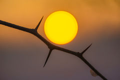 The Sun. Golden Sun surrounded by thorns royalty free stock photo