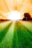 Sun and grain. The sun illuminates the cornfield Stock Images