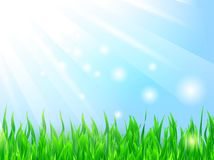 Sun and grass Royalty Free Stock Image