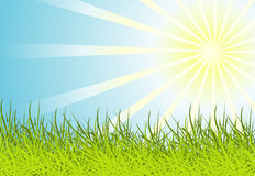 Sun and grass background Stock Images