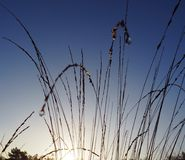 Sun between the grass Royalty Free Stock Images