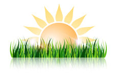 Sun and grass with reflection Stock Photos