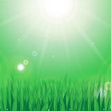 Sun and green grass. With dew drops on a green background Stock Images