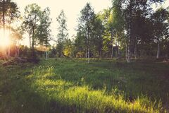 Sun on Green Grass with Trees Royalty Free Stock Photography