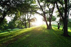 Sun in the green spring park Royalty Free Stock Photo