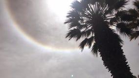 Sun halo phenomena. Above the palm tree in Arequipa city stock footage