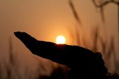 Sun on hand Stock Image