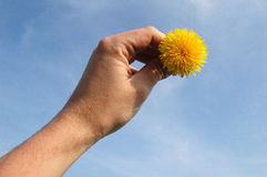 Sun in hand. Flower of blowboll in fingerst against sky stock photos