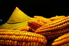 Sun hat White corn planted on corn, yield of corn farmers. Will be stored to keep the dry royalty free stock photography