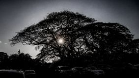 Sun through Hawaiian tree stock photography