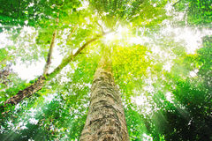 Sun-helle Oberseite der fälligen Bäume Stockfotos