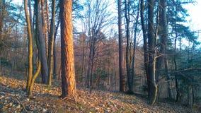 The Sun in het bos Royalty-vrije Stock Afbeelding