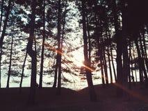 The Sun in het bos stock afbeelding