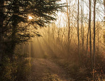 The Sun is hidden behind the branches of the tree.  royalty free stock photography