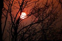 Sun hinter Bäumen Stockfotografie