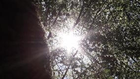 Sun hinter Bäumen, Wind und Reflexionen von Lichtern stock video footage