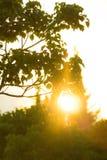 Sun hinter Baumblattsonnenuntergang stockbilder