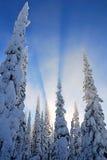 Sun hinter den Bäumen Lizenzfreie Stockbilder