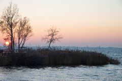 Beautiful sunset on the lake with a profile of trees and reeds. royalty free stock image