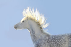 Sun in horse mane. Sun rays in horse mane stock image
