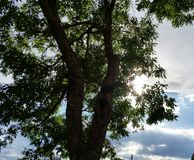 Sun i drzewo Obraz Royalty Free