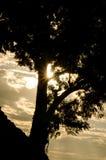 Sun i drzewo Obrazy Stock