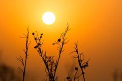 Sun i roślina Zdjęcie Royalty Free