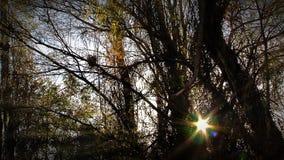 The Sun i skogen arkivfilmer