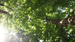 Sun illuminates tree leaves. Time lapse stock video