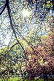 Sun illuminating through tree branches and leaves Royalty Free Stock Photo