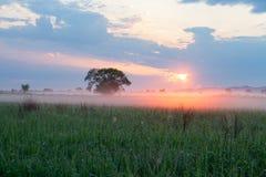 Sun illuminating morning fog Stock Photos