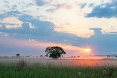 Sun illuminating morning fog Royalty Free Stock Photo