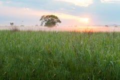 Sun illuminating morning fog Royalty Free Stock Images