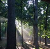 Sun ilumina o brilho através das árvores com folhas verdes Fotos de Stock