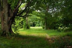 Sun iluminou o campo nas árvores Fotos de Stock Royalty Free