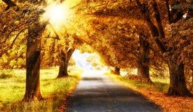 Sun im autmn Wald lizenzfreies stockbild